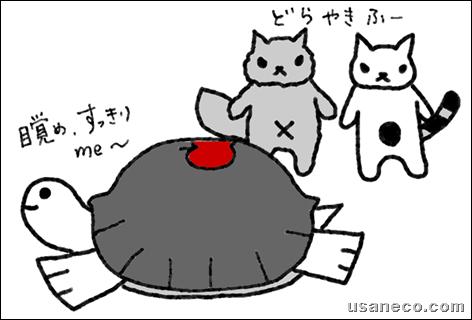 うさねこ.com_20110829_01